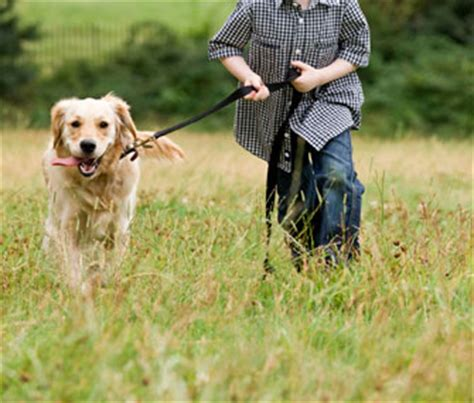 How Can I Prepare My Child to Care for a Dog?