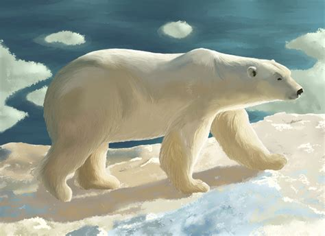 Illustration animale : l'ours polaire | Blog Dinett