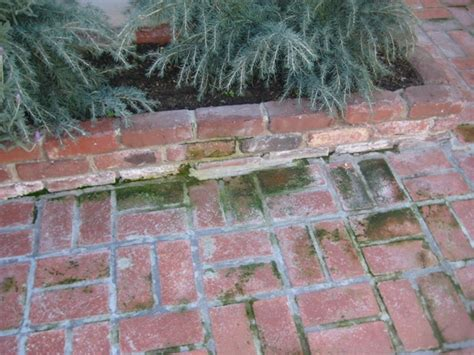 cleaning - How do I remove moss from an outdoor brick